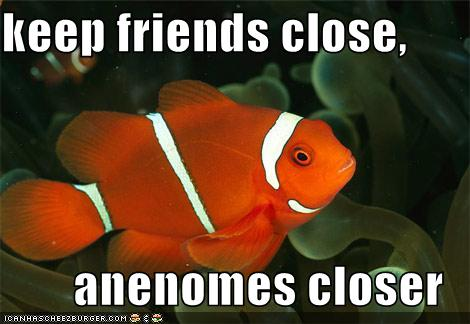 Keep your friends close, anenomes closer.